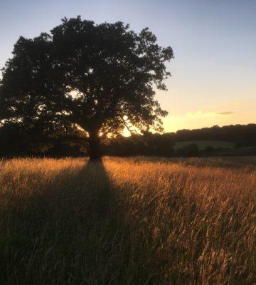 sunset-moments-N6VH6QV (Custom)